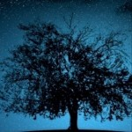 Big Tree and Stars